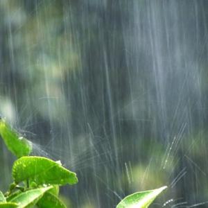 【天から横に降る雨はない】ということわざはどんな意味なの?