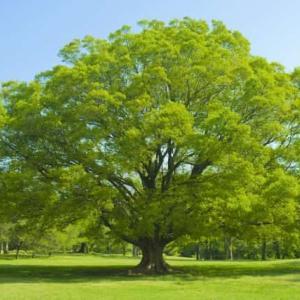 【大木の下に小木育たず】とはどんな意味のことわざなの?