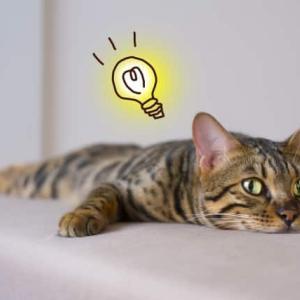 【ちょっかいを出す】という言葉の語源は猫だった?