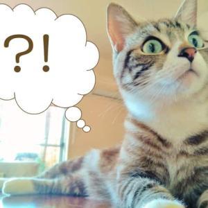 【猫をかぶる】の語源はやはりネコ?由来になったワケとは!