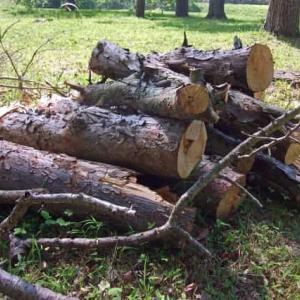 【直木まず伐らる】とはどんな意味のことわざなの?使い方は?