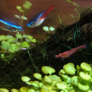 Wishで買って良かったもの 〜水草の種で水槽に緑のじゅうたん〜