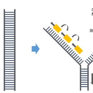 DNA複製メカニズムと株価変動モデルは「保存」と「変革」がある点で似ている。