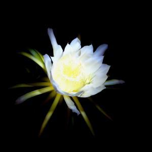 仙台での霊能力開花合宿