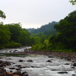 梅雨の中休みに~石徹白川渓流釣行