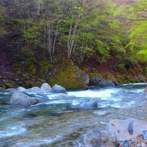 皐月5月の馬瀬川上流 イワナ釣り