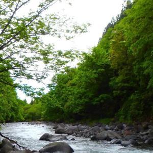 雨後の飛騨庄川支流一色川釣行