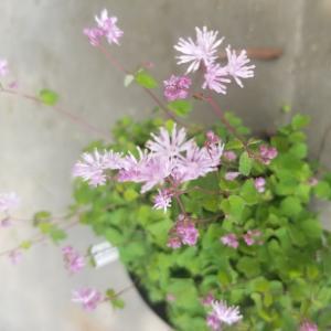 小さな野の花