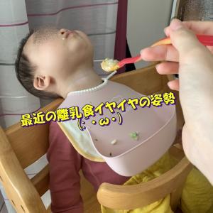 今日のポンちゃん日記(ママちゃん目線)