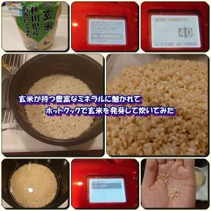 玄米が持つ豊富なミネラルに魅かれて、ホットクックで玄米を発芽して炊いてみた