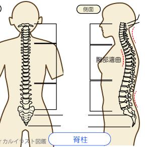 背骨をしならせる動作の、出番と必要性 その2