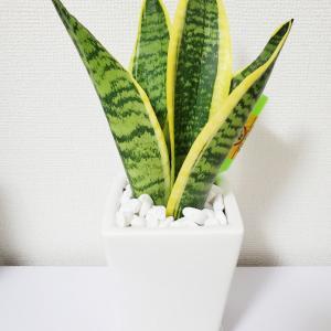 ついに観葉植物ゲット♪キレイな空気でリラックスするのだ!