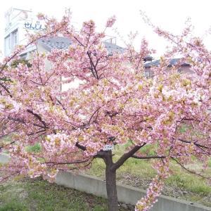 いつまでも続く約束 ~桜の便りから~