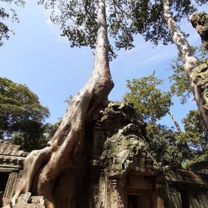 カンボジア旅行2日目「タ・プロム」