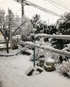 久々の雪降り