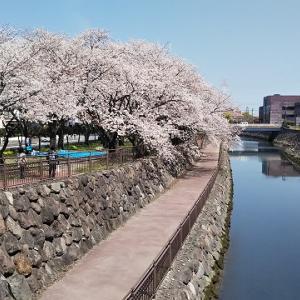 桜 さくら サクラとお花三昧の日
