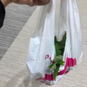 ダイソーで観葉植物購入!