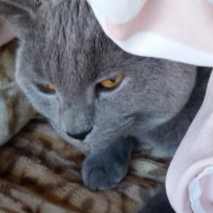 いつも買っている猫のご飯が在庫切れ・・・まずい