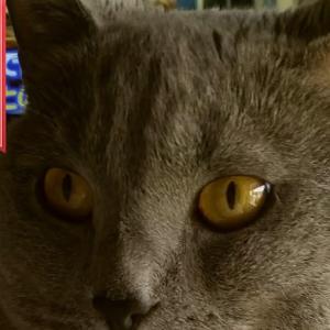 猫を飼っていると猫グッズを貰うことが多くなる