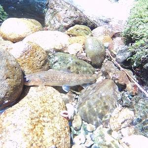 渓流釣り2020 4回目 ルアーフィッシングと餌釣り