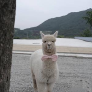 【全羅南道】アルパカに会える韓国Cafe