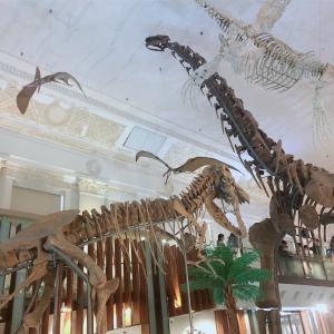 勧業銀行旧廈で恐竜の化石を見よう@台北駅、台大醫院駅