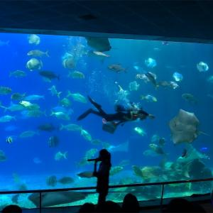 台湾の水族館に泊ろう!@国立海洋生物博物館ー墾丁