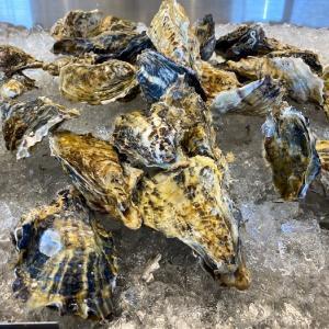 札幌市のおすすめ牡蠣食べ放題の店まとめ7選【生牡蠣も】