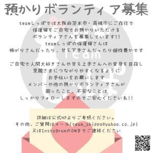 【急募】預かりボタンティアさん大募集!!!!