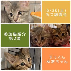 譲渡会参加猫紹介第2弾