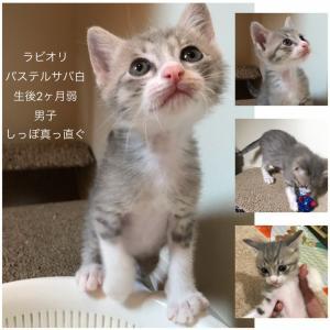 譲渡会参加ネコ紹介❤️