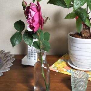 絶壁のバラ