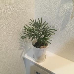 トイレに緑が欲しい!