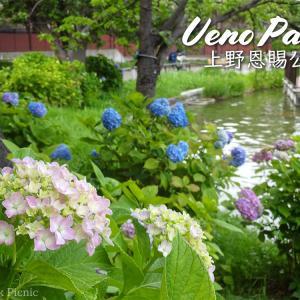 【あじさい2019】水辺のアジサイが楽める上野公園 / Hydrangea of Ueno Park @上野