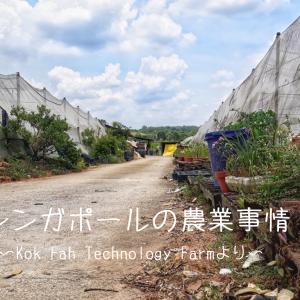 シンガポールに農園?未来を牽引する最新技術とは