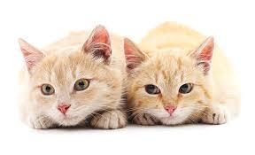 <br />可愛い子猫のための離乳食