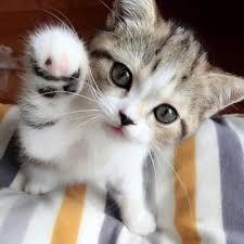 <br />ペットの猫ちゃんに 鯛のうま煮風味を! よく食べますよ!