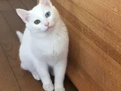 猫ちゃん 元気ですか? 乳酸菌入りフードで より健康!