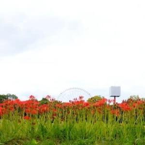 万博公園の彼岸花