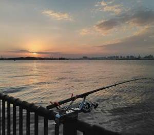 東京湾・若洲のアジを釣る方法