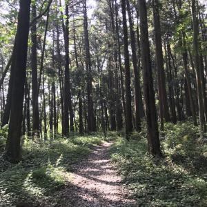 横浜トレイル 「横浜の森も侮れない」