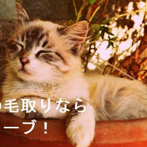 猫の毛取りはグローブで決まり!猫が喜ぶブラッシング!