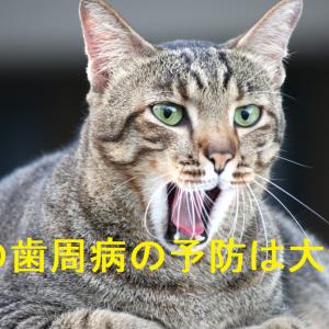 猫の歯周病の予防が大切な理由は?歯周病を防ぐためにできること