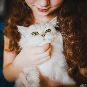 猫が欲しい!どこで猫を手に入れたらいいの?大切な家族と出会う方法