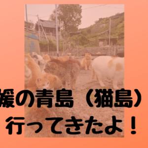 青島(猫島)へ確実に行くなら旅館は「民宿漁亭」がおすすめ!