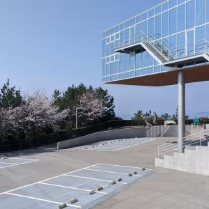 【高知】桂浜公園と桜、そして高知市中心部のサクラの見処3選(高知城、堀川、五台山)