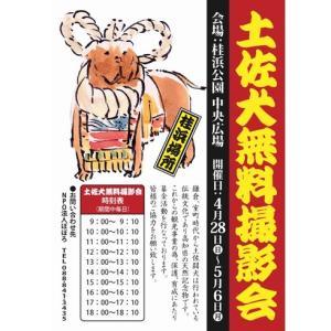 2019年 桂浜でゴールンウィーク(GW)の期間中に土佐犬無料撮影会が開催されます