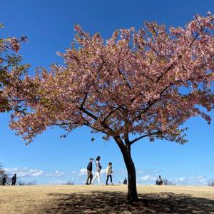 いせさき市民のもり公園|河津桜が見頃の時季!お花見におすすめの公園:群馬県伊勢崎市
