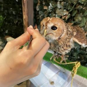 ふくろうカフェFUKU|フクロウへのエサやり体験の雰囲気・料金:栃木県足利市