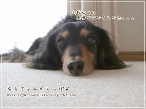 「花子と先生の18年 人生を変えた犬」が、東海テレビで放送